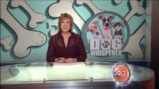 Dogtamers On Aca Ch:9 Australia - Justin Booth