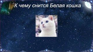 К чему снится Белая кошка (Сонник)