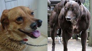 САМЫЕ НЕОБЫЧНЫЕ СОБАКИ В МИРЕ!(В мире существует множество необычных собак, которые поражаю своим внешним видом,способностями и даже..., 2015-09-03T12:00:02.000Z)