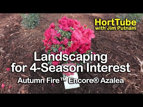 Gardening For Year Round Interest - Autumn Fire™ Encore® Azaleas