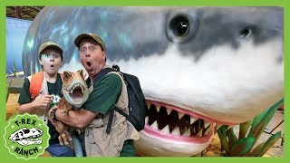 Dinosaurs & Giant Megalodon Shark! Baby T-Rex Dinosaur Missing in Jurassic Quest Kids Adventure