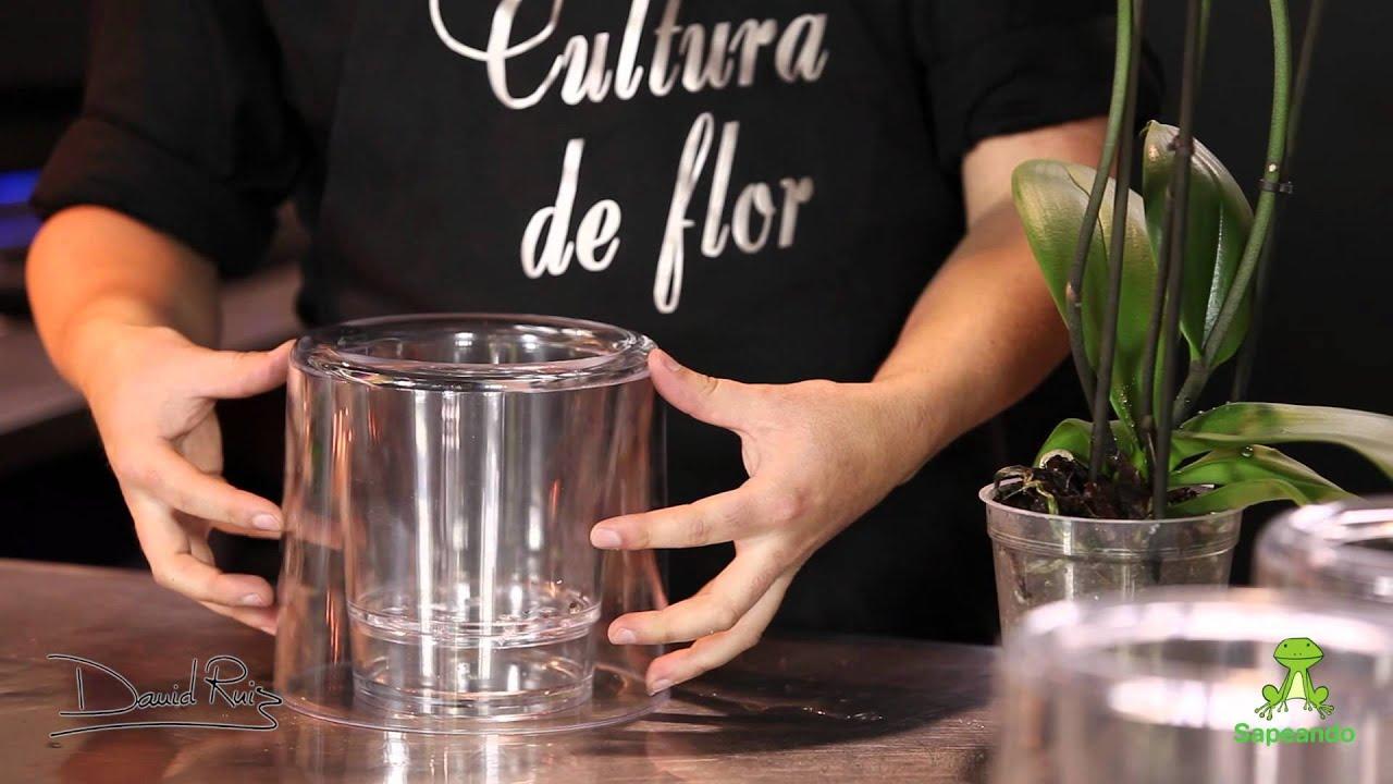 Cuidados de una Orqudea Phalaenopsis YouTube