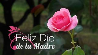 Feliz Día de la Madre - Tarjeta animada