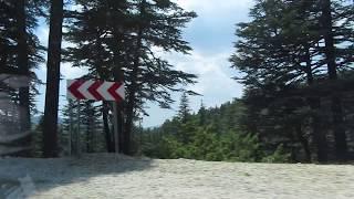 Toroslarda 1500 metrede sedir (katran) ağaçları