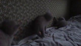 котята бавятся