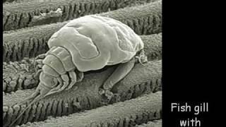 Microscopic World
