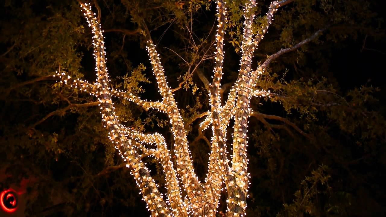 5th Ave South In Naples Fl Decorated By Trimmers Holiday Decor Inc