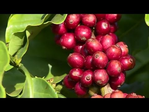 Nestlé develops sustainable water use for Vietnam coffee production