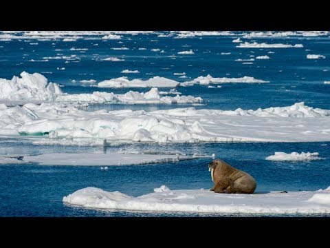 The Arctic will never be frozen again - Climate Change Part 1/3