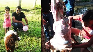 Full sheep cooking for kids| Delicious lamb curry prepared for children