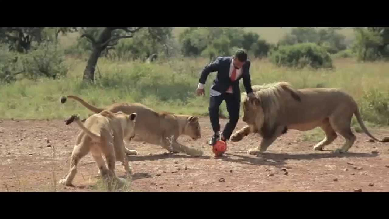 Animals In Suits Wallpaper A World S First Kevin Richardson Playing Football With