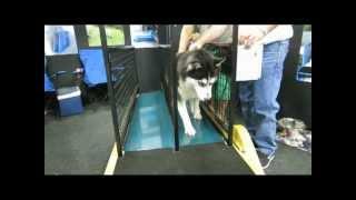 Top Dog Walking Machines Sat Canine Stars