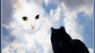 танки онлайн № 6  ( привет я твоя кошка )