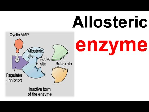 enzyme assignement 2