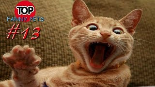 ПРИКОЛЫ 2019 ТОП СМЕШНЫХ ВИДЕО С КОТАМИ Смешные животные Смешные кошки TOP FUNNY PETS 13