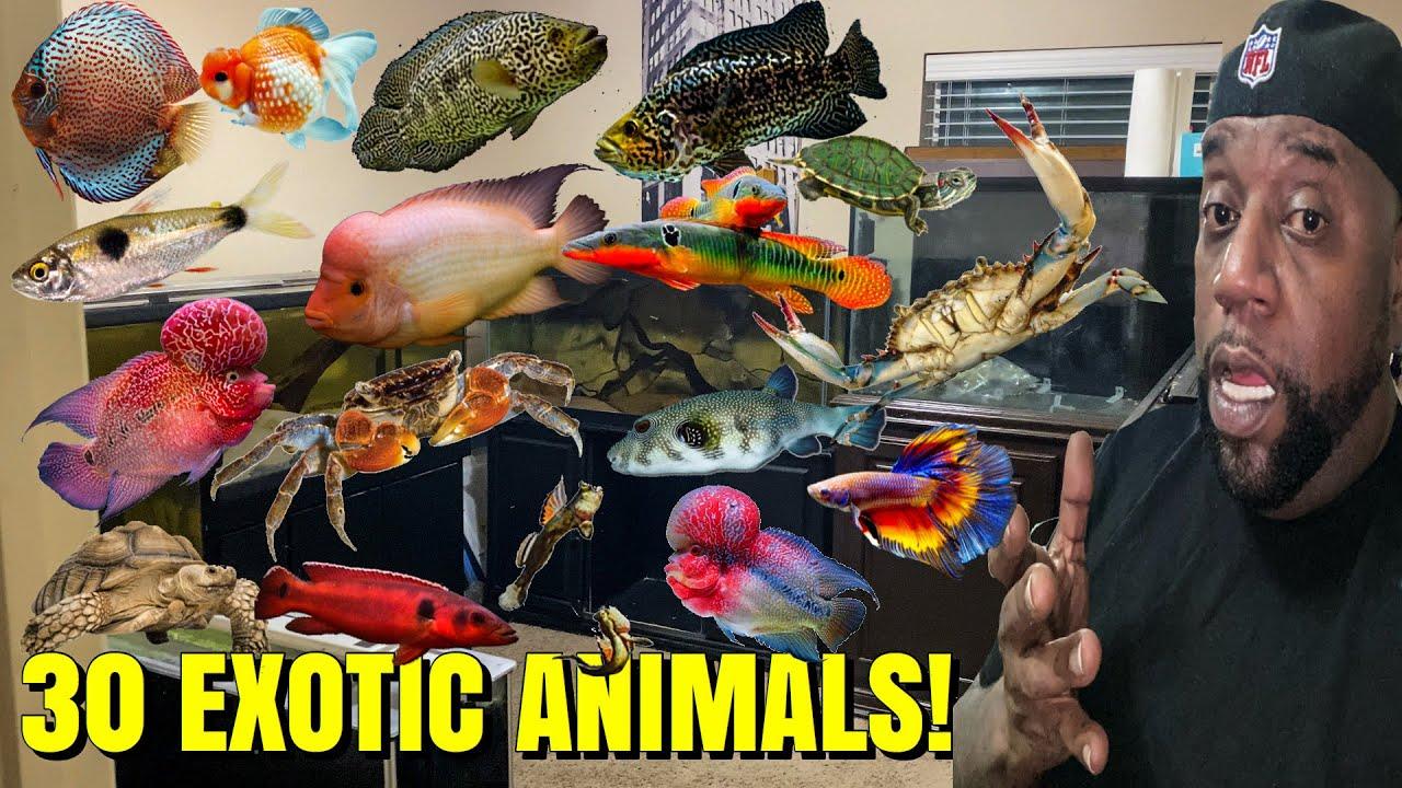 Download ALL MY EXOTIC ANIMALS AND AQUARIUM FISH