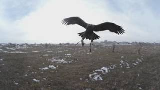 Хотите полетать как беркут? Смотрите это видео в 360° (4К)!