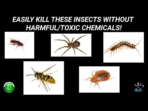 how-to-kill-roaches-without-chemicals-or-pesticides!