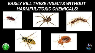 How To Kill Roaches WITHOUT Hazardous Chemicals