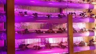 видео Бизнес на выращивание клубники из рассады frigo