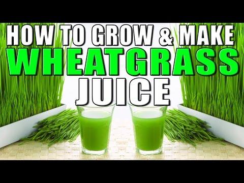 How to grow & make Wheatgrass Juice at home II गेहूँ की घास उगाने और जूस निकलने की विधि II