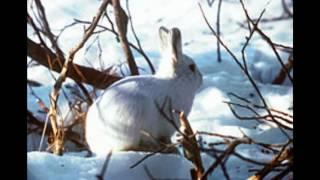 Школьный доклад по окружающему миру на тему арктические животные
