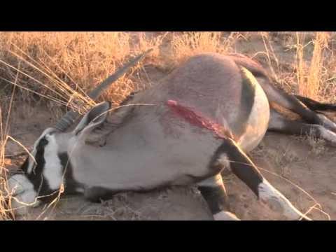 Ramos Hunts & Video Elias Sanchez 2013 NM Oryx