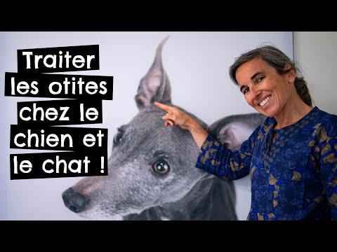 Traiter Les Otites Chez Le Chien Et Le Chat !