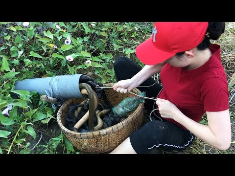 Unbelievable Experiment Oil Fishing | Unique Snake Trapping System Catch A Lot Of Snake In Fish-Hole