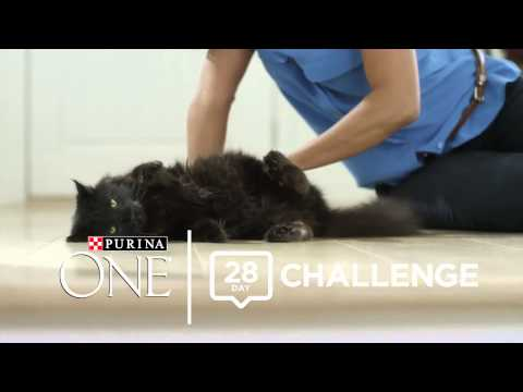 The Purina ONE® Cat 28-Day Challenge With Carrie Ann Inaba And Mimi