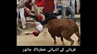 Bakra Eid funny video |Rana Ahsan|