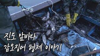 매일 바다로 출퇴근하는 갑오징어 형제 [Korea Island]