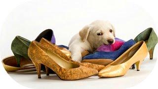 Смешные Собаки в Обуви Прикольная Видео Подборка Приколы с Собаками