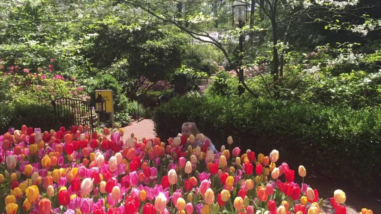 Botanic Gardens   Memphis, TN Spring 2016