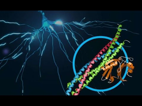 Scientists discover atomic resolution details of brain signaling
