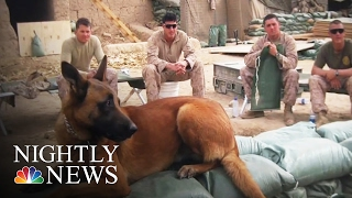 'He Saved My Life': Vet with PTSD Reunited with Dog Four Years Later | NBC Nightly News