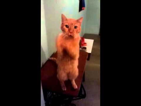 Luca, un gato con 18 años de felicidad.