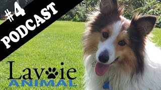 Lavoie Animal Podcast #4 BARF et alimentation crue
