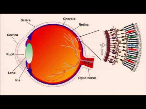 Café Scientifique: Personalized Medicine — Using Skin & Blood Cells to Cure Blindness