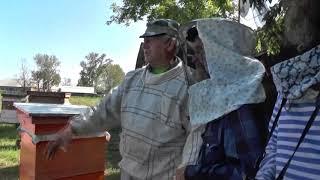 видео Есть мед на продажу | Блог Сергея Самойлова