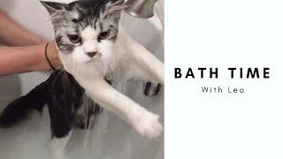 Cat takes a bath l Leo the Persian Kitty