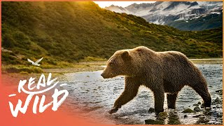 The Incredible Wildlife Of The Rocky Mountains (Nature Documentary) | Going Wild | Real Wild