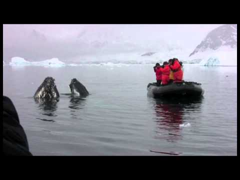Humpback Whales - Neko Harbour, Antarctica