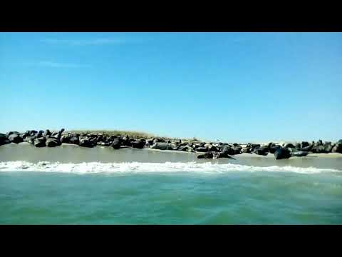 Shark bit side of seal  now on beach..