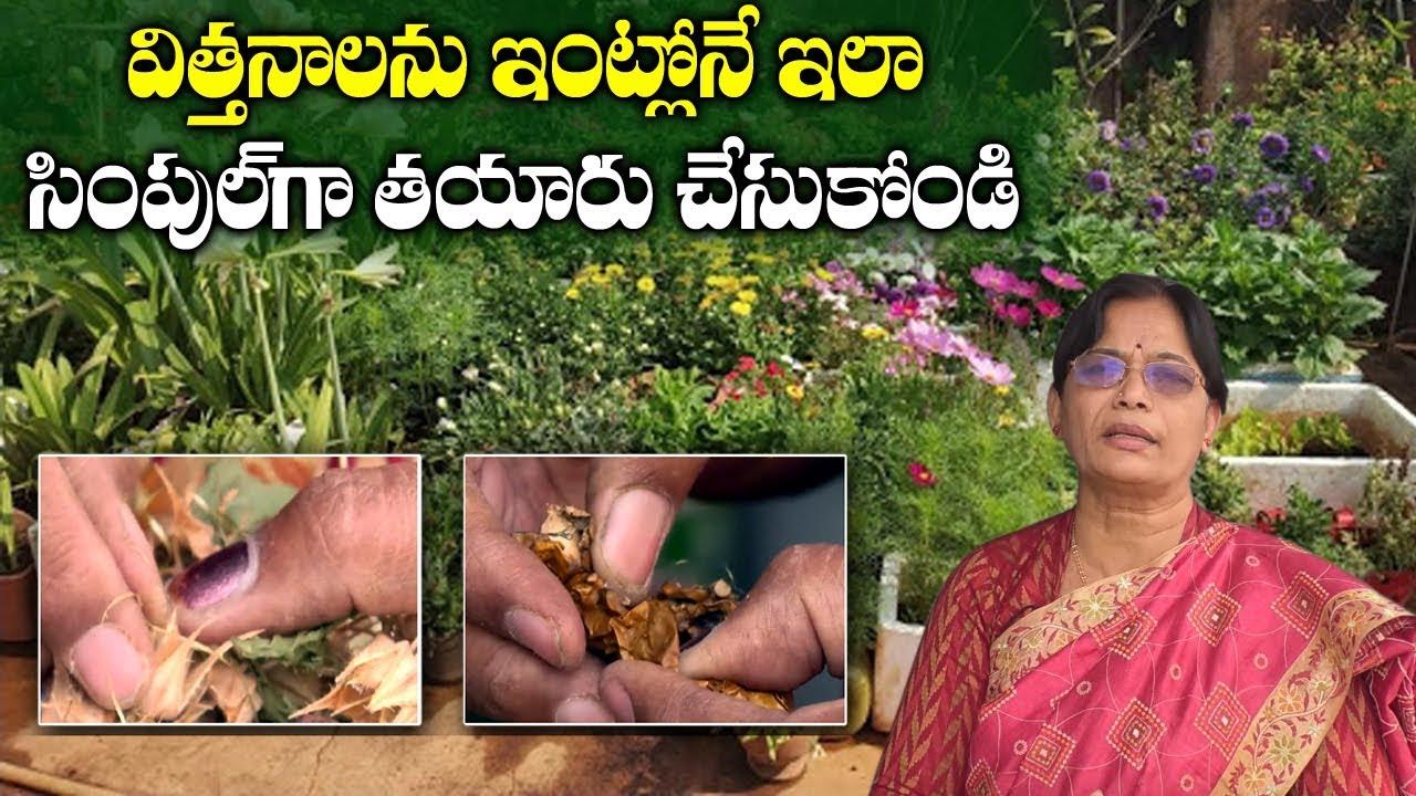 Terrace Garden Maintenance Tips In Telugu Tips For Beginners Sumantv Tree Youtube