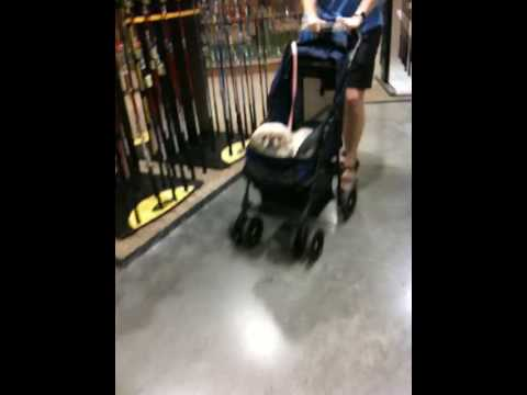 A guy pushing a dog in a stroller at Dick's. Hhhmmmmm….