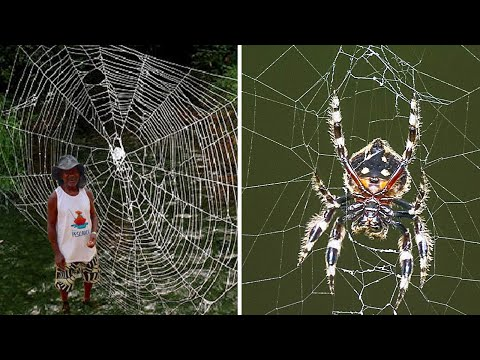 10 STRONGEST Spider Webs In The World!