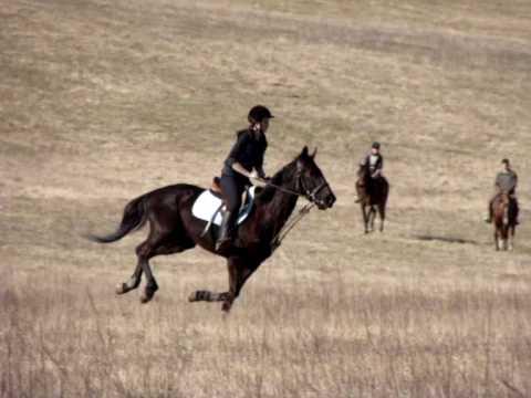 Galop dans un champs a cheval youtube - Comment dessiner un cheval au galop ...