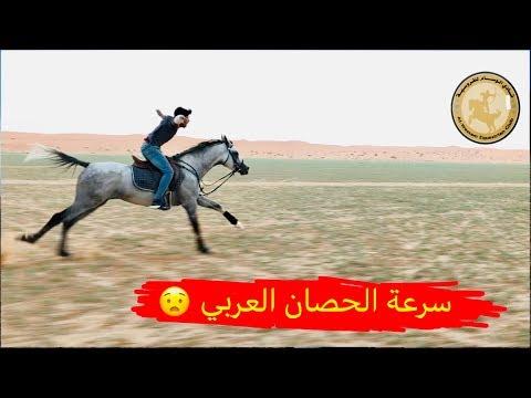 تعال شوف سرعة الحصان العربي - The speed of the Arabian horse