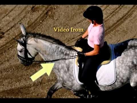 Riding Diagonal Aids - 40 Fundamentals of English Riding